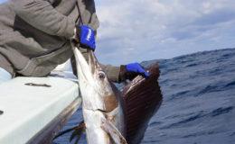 sailfish-fishing-charter
