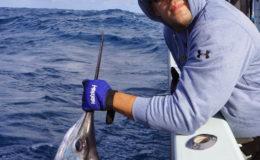 sailfish_2